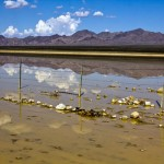 Ivanpah......'wet' lakebed