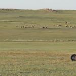 2015.06 Madway Mongolia 003